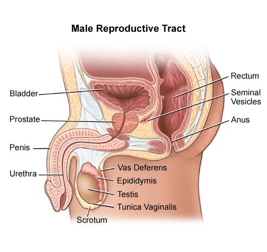 Penile Cancer